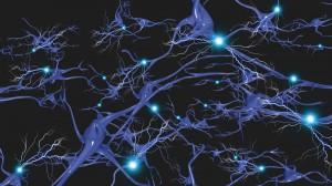neural pahtways photo